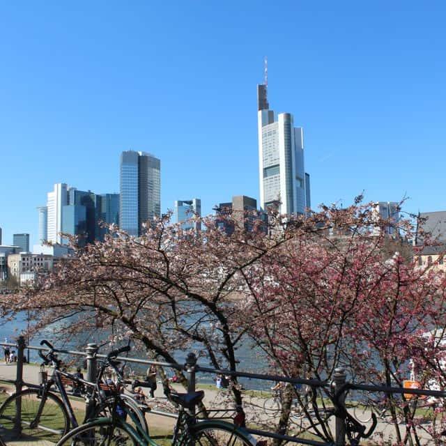 Kirschblüte_Frankfurt9