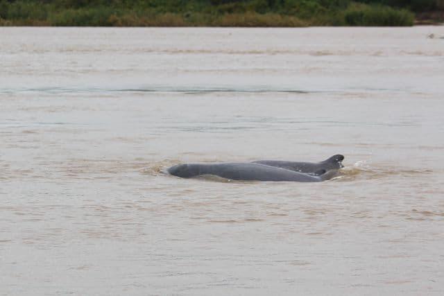 Mekong05
