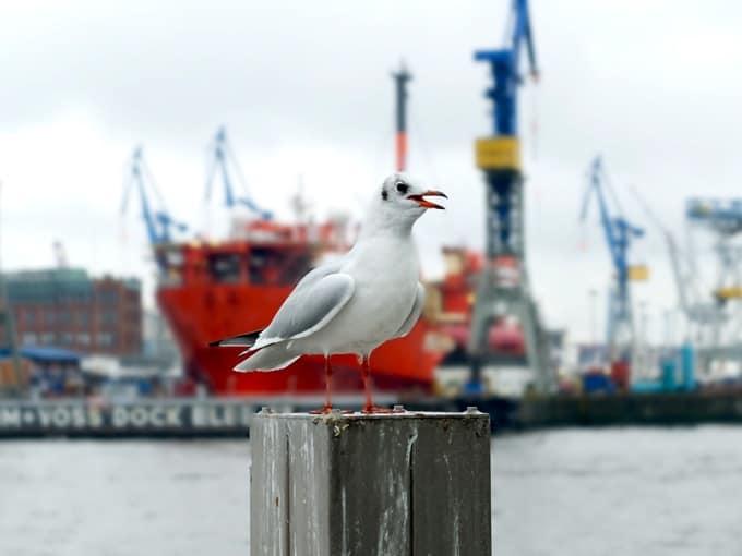 Hamburg-maritim05