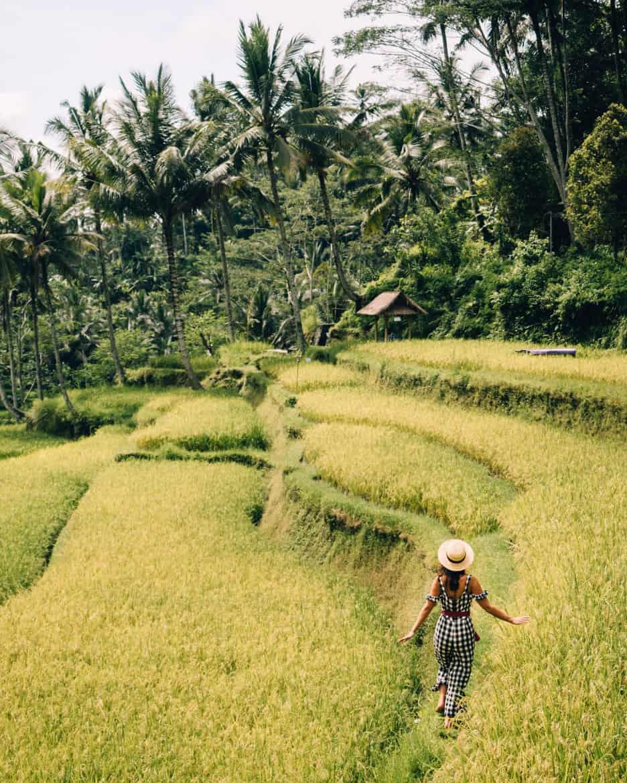 Mit dem Roller die Natur rund um Ubud erkunden