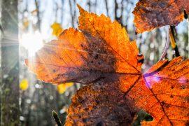 Herbstliches-Fotoessay-1