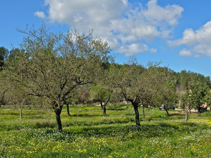Radfahren-Mallorca-Teil1-03