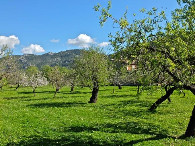 Radfahren-Mallorca-Teil1-14