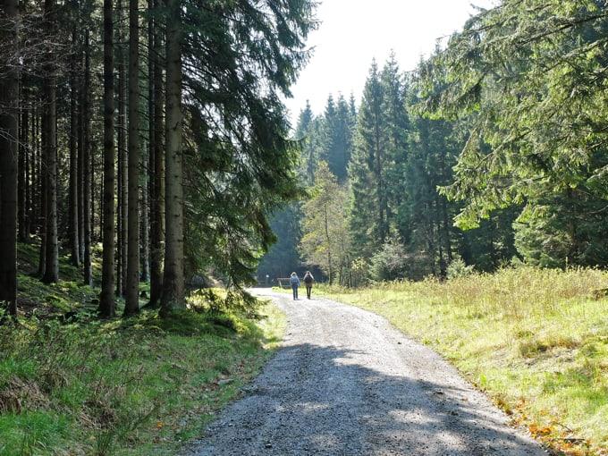 Wolfswarte-Wanderung-Altenau04