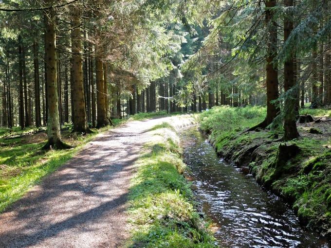 Wolfswarte-Wanderung-Altenau05