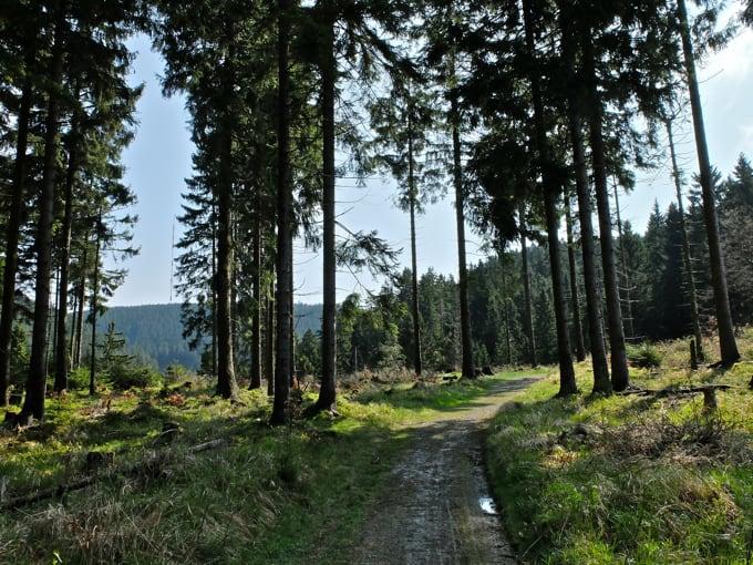Wolfswarte-Wanderung-Altenau10