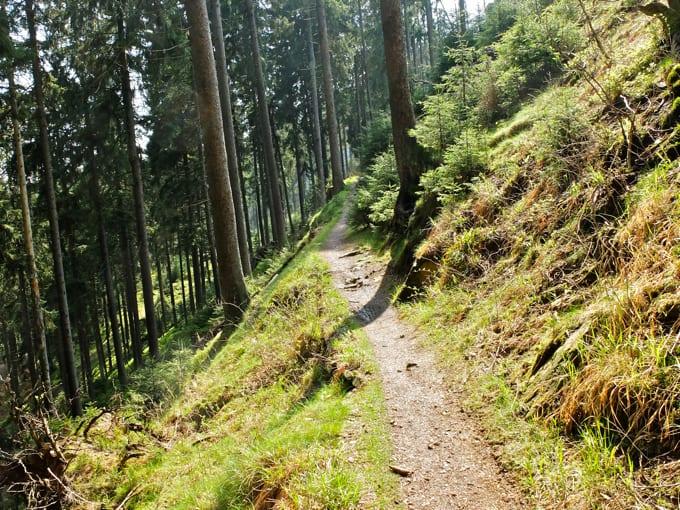 Wolfswarte-Wanderung-Altenau13
