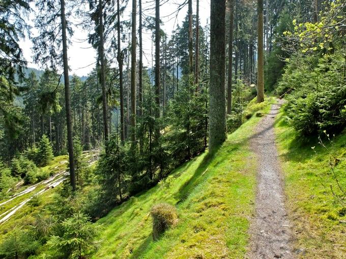 Wolfswarte-Wanderung-Altenau15