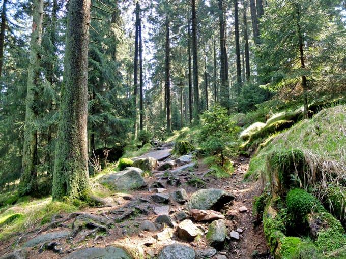 Wolfswarte-Wanderung-Altenau18