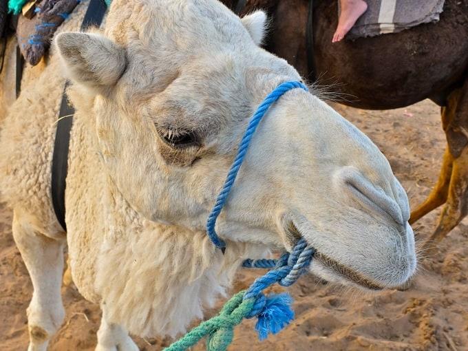 Marokko-Wueste06