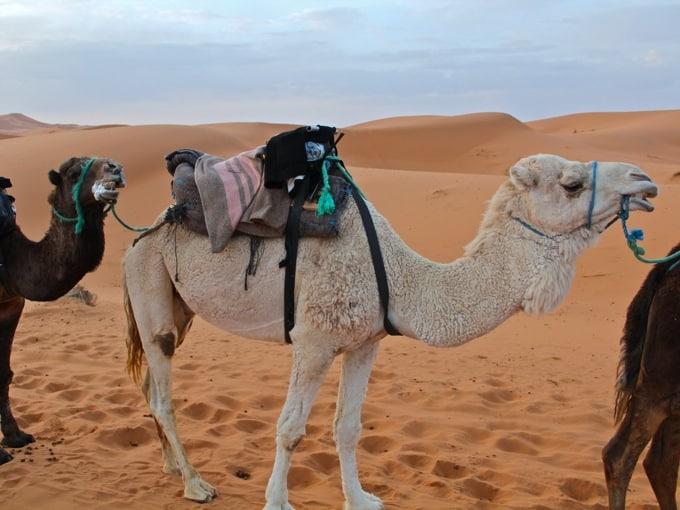 Marokko-Wueste10