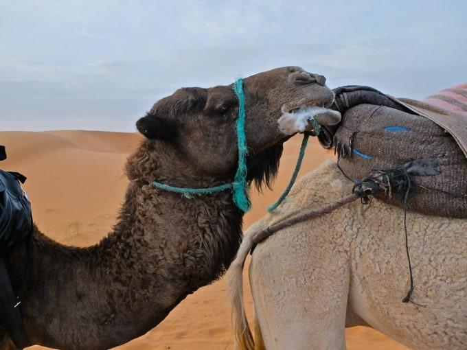 Marokko-Wueste15