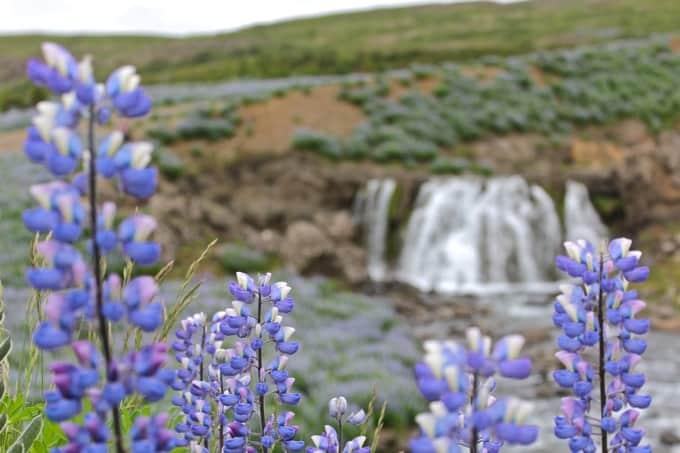 Island-Hvalfjoerdur-nach-Borganes12