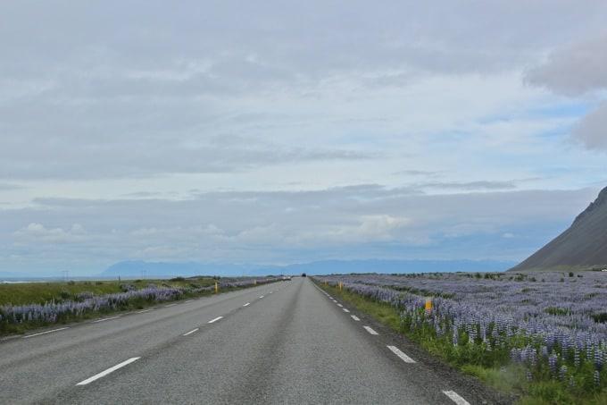 Island-Hvalfjoerdur-nach-Borganes25