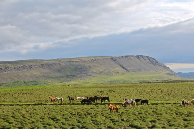 Island-Hvalfjoerdur-nach-Borganes35