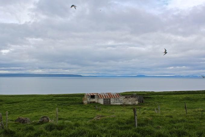 Island-Vatnsnes06