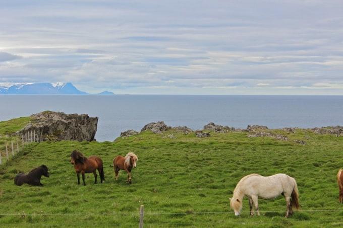 Island-Vatnsnes13