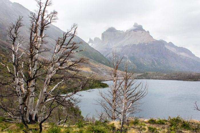 Torres del Paine W-Trek: Alle Infos, Tipps & Erfahrungen - Blick auf den Lago Skottsberg