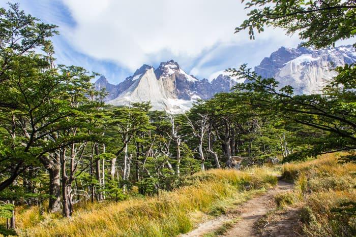 Torres del Paine W-Trek: Alle Infos, Tipps & Erfahrungen - Durch den Wald im Valle de Frances