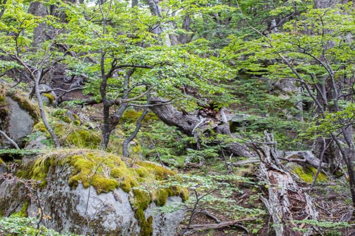 Torres del Paine W-Trek: Alle Infos, Tipps & Erfahrungen - Wandern im Valle de Frances