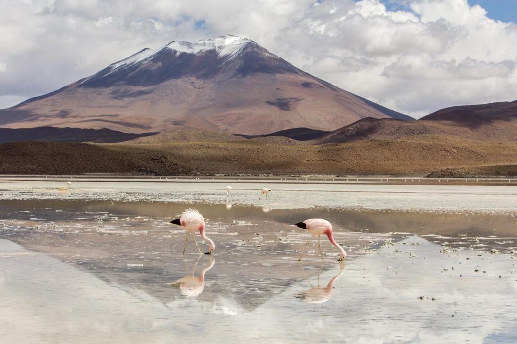Salar de Uyuni Tour: Jeep Tour über die Lagunenroute in Bolivien - Laguna Hedionda