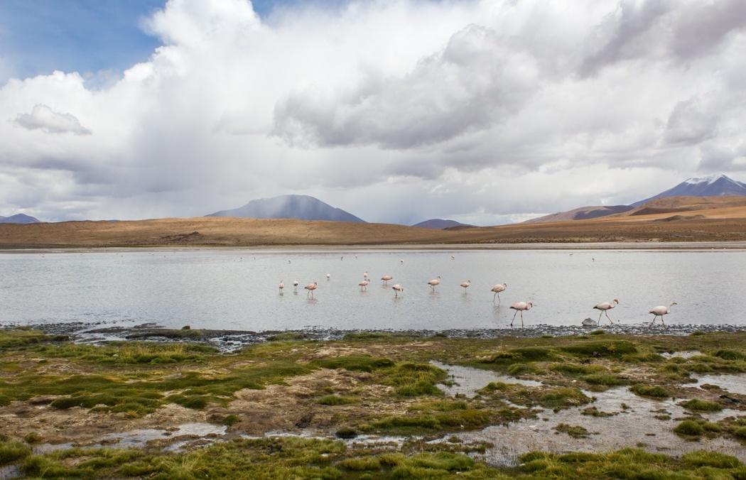 Salar de Uyuni Tour: Jeep Tour über die Lagunenroute in Bolivien - Salzwüste Chiguana
