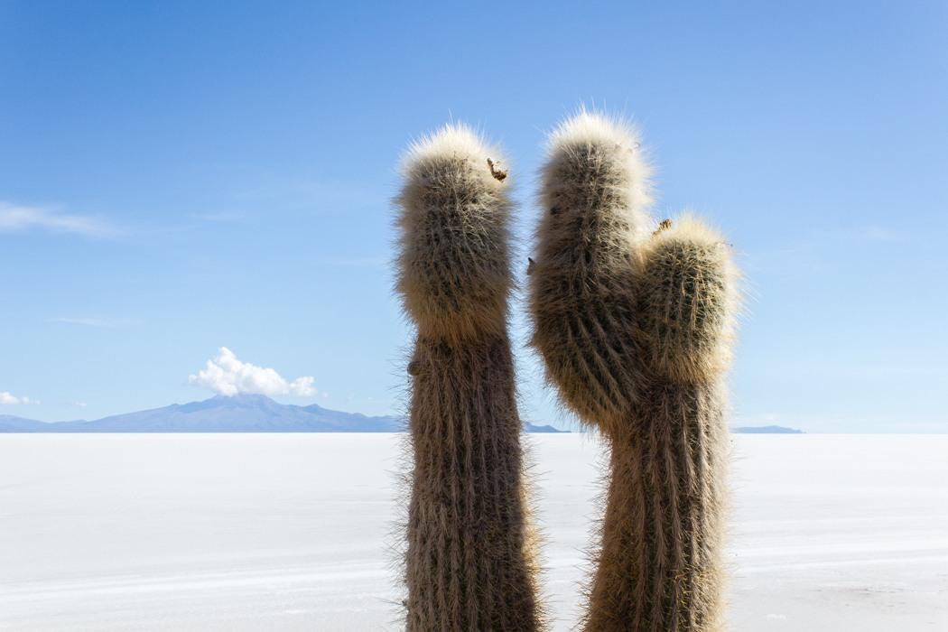Salar de Uyuni Tour: Jeep Tour über die Lagunenroute in Bolivien - Aussicht von der Insel Incahuasi