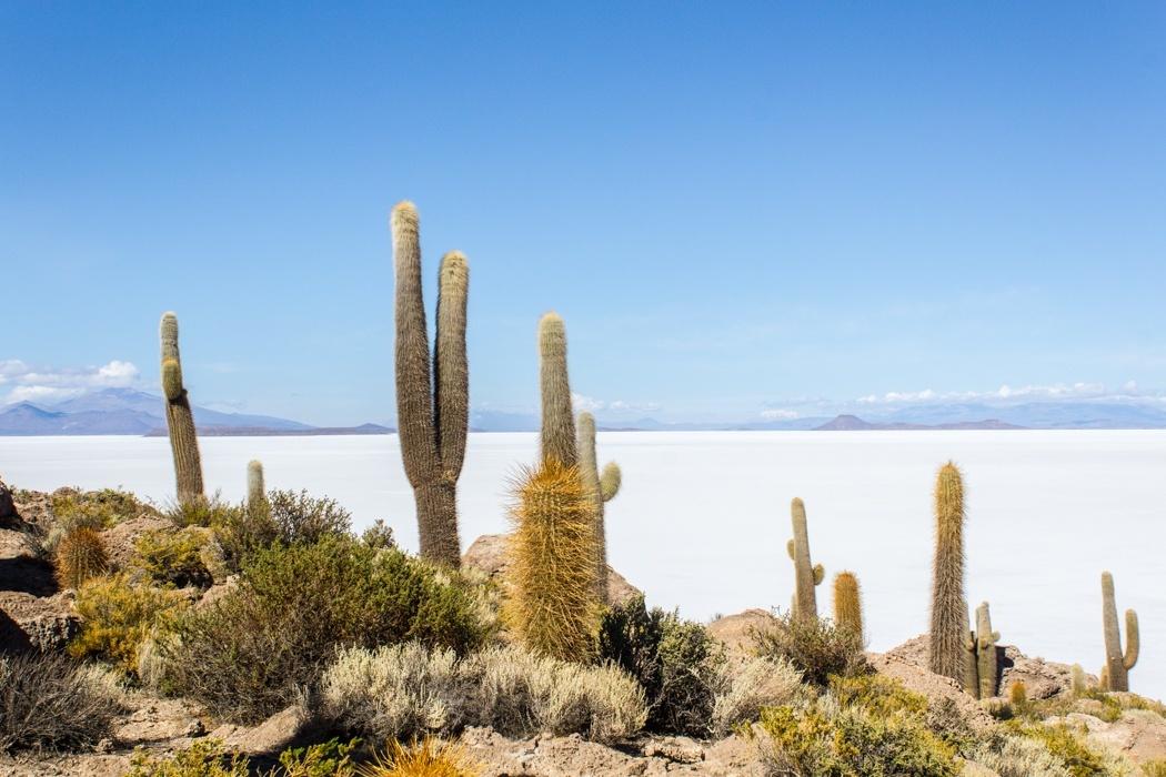 Salar de Uyuni Tour: Jeep Tour über die Lagunenroute in Bolivien - Insel Incahuasi