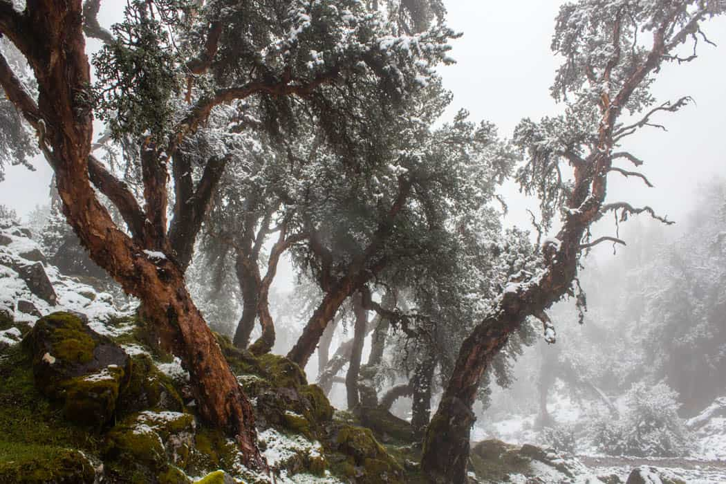 Machu Picchu Guide - Schnee auf dem Lares Trek