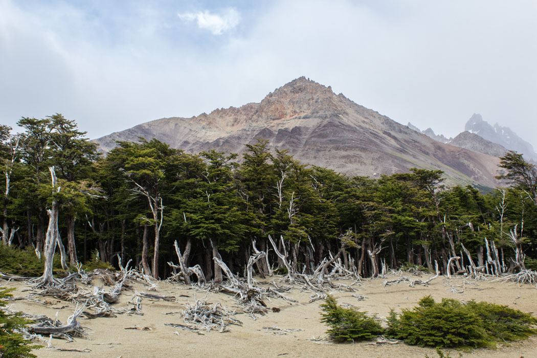 El Chaltén - Wanderung zur Laguna Los Tres - Bizarre Landschaft