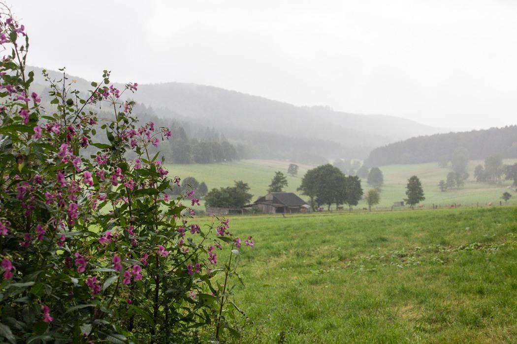 Wandern-Weserbgerlandweg-14