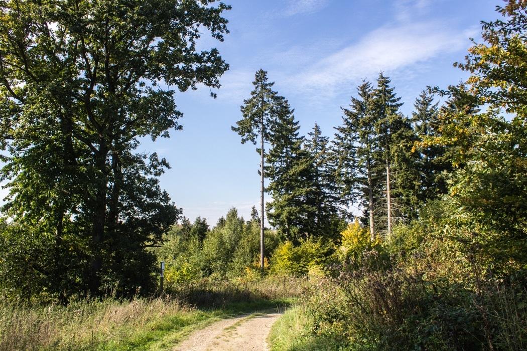 Wanderung-Ehrbachklamm-Hunsrueck-3