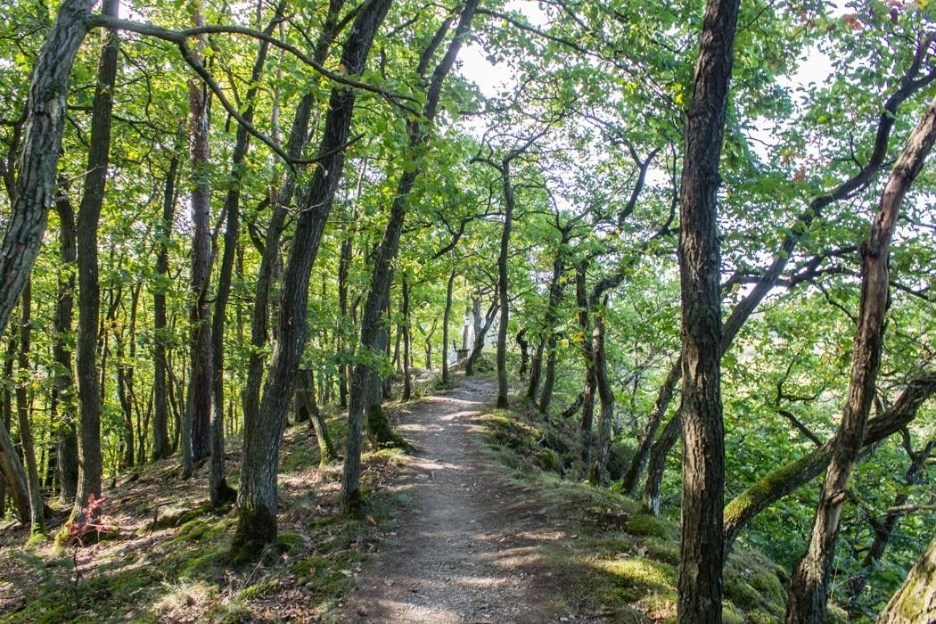 Wanderung-Ehrbachklamm-Hunsrueck-4