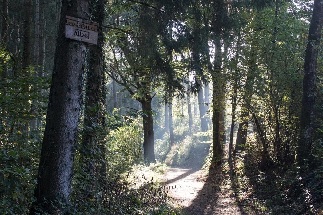 Lieserpfad-Trekking-17
