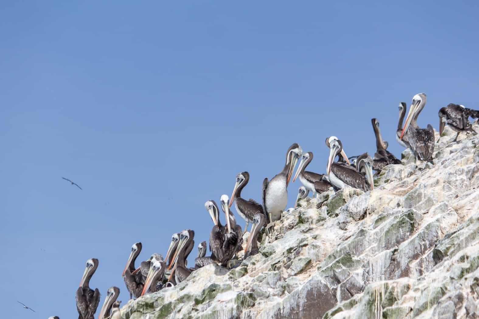 Islas Ballestas-Paracas-15