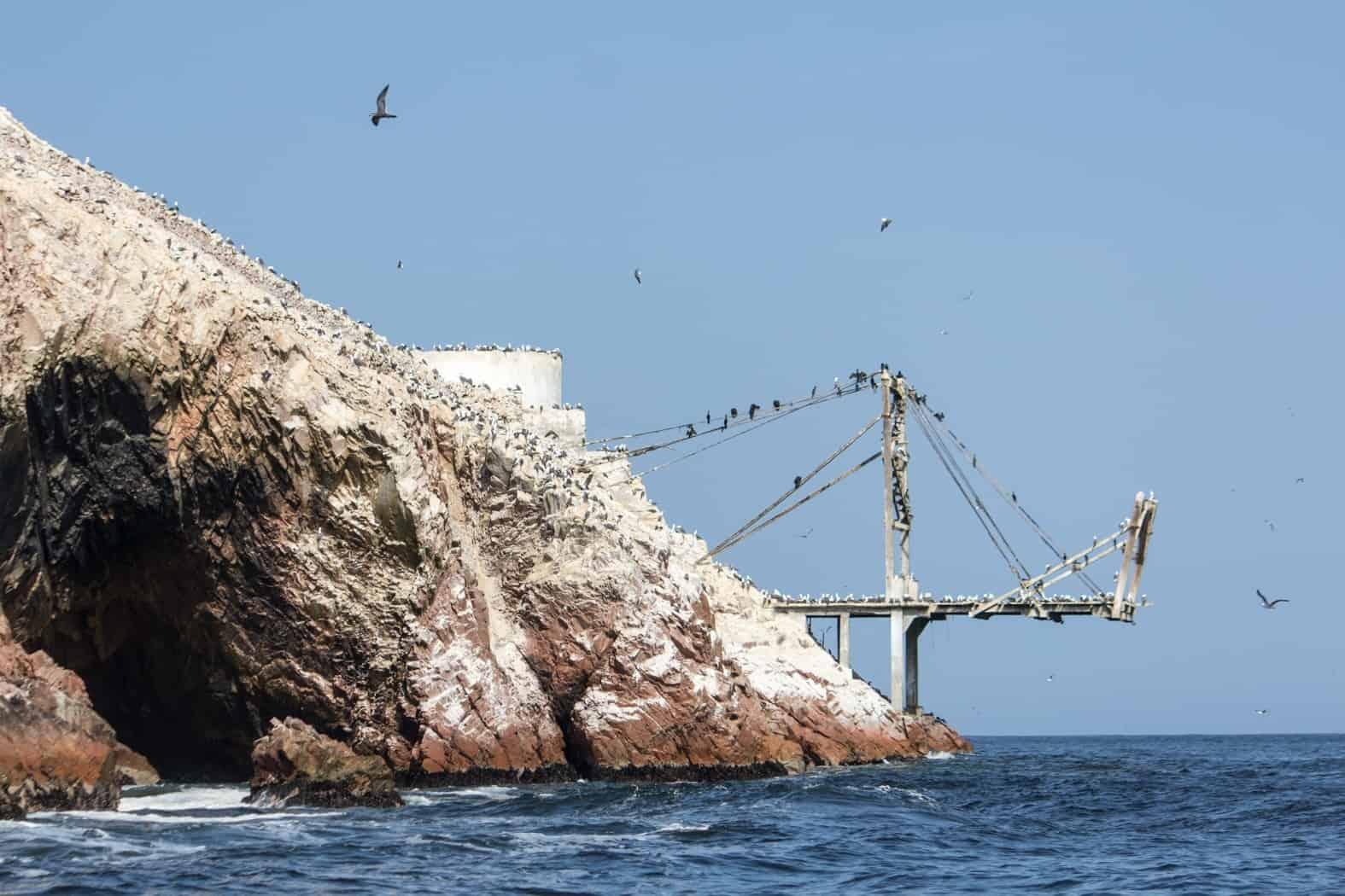Islas Ballestas-Paracas-17