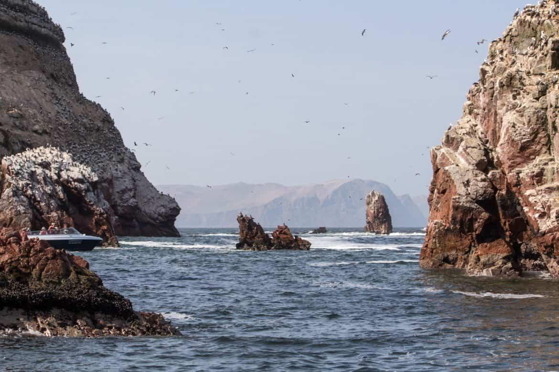 Islas-Ballestas-Paracas-21
