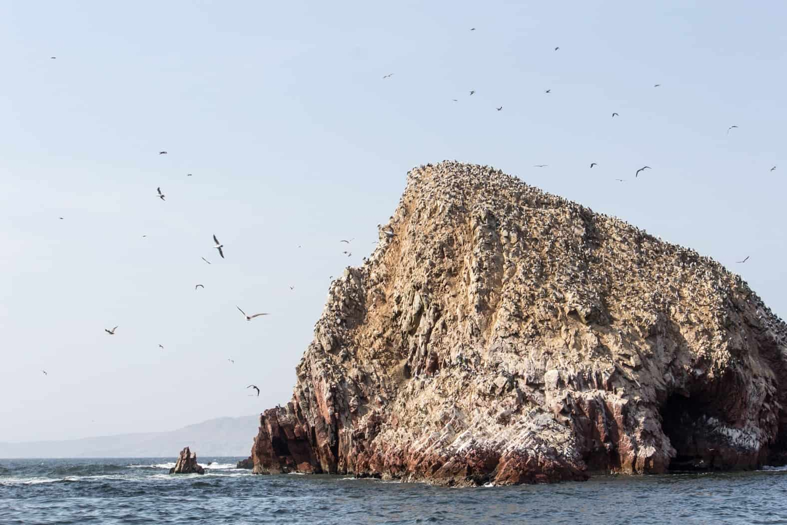 Islas-Ballestas-Paracas-26