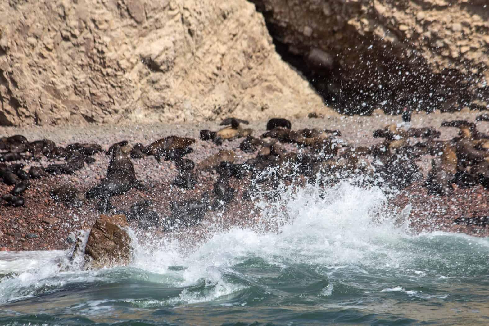 Islas Ballestas-Paracas-32