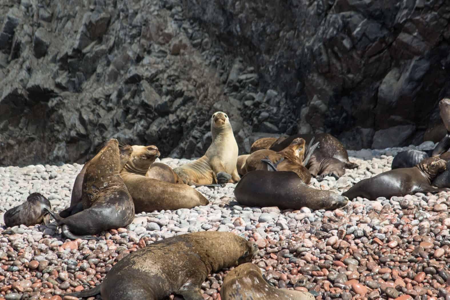 Islas Ballestas-Paracas-33