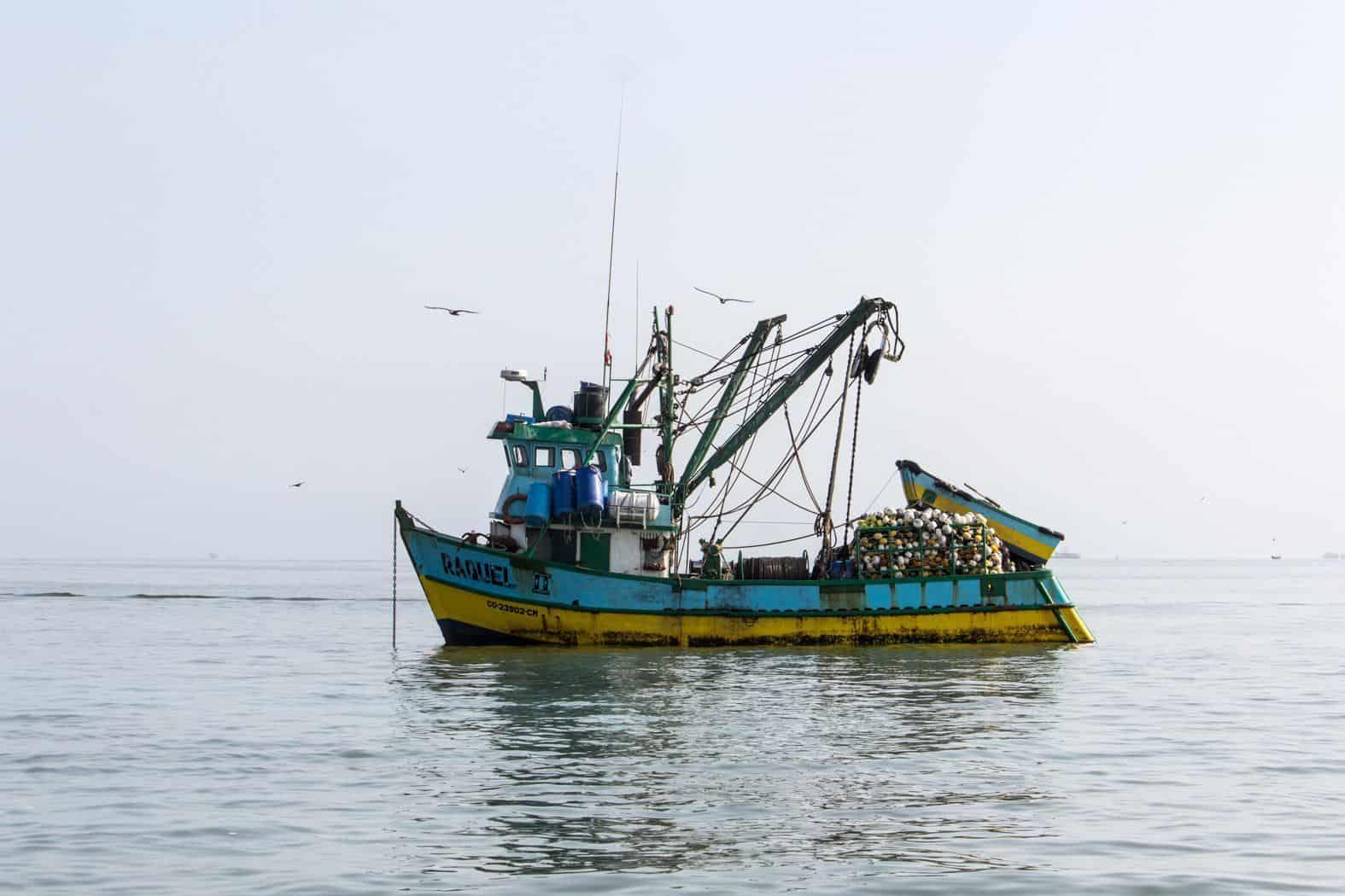 Islas Ballestas-Paracas-5