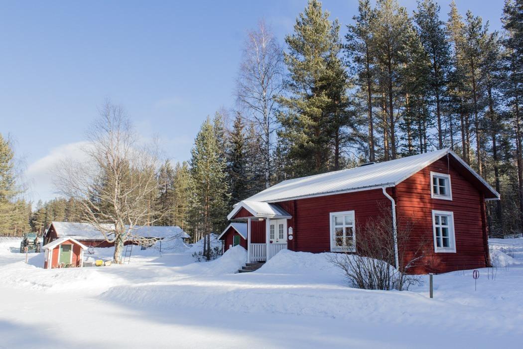 Schwedisch Lappland - 7 Abenteuer, die du erleben musst! z.B. Übernachten auf einem Bauernhof in Pitea
