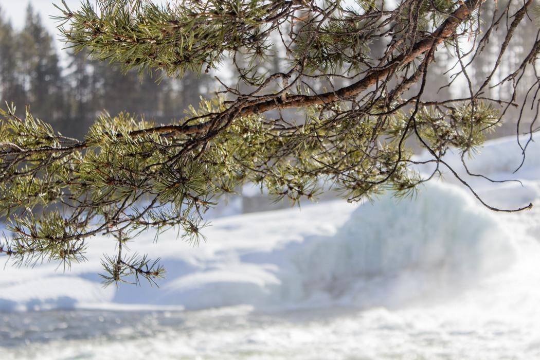 Schwedisch Lappland - 7 Abenteuer, die du erleben musst! z.B. Natur im Storforsen Nationalpark
