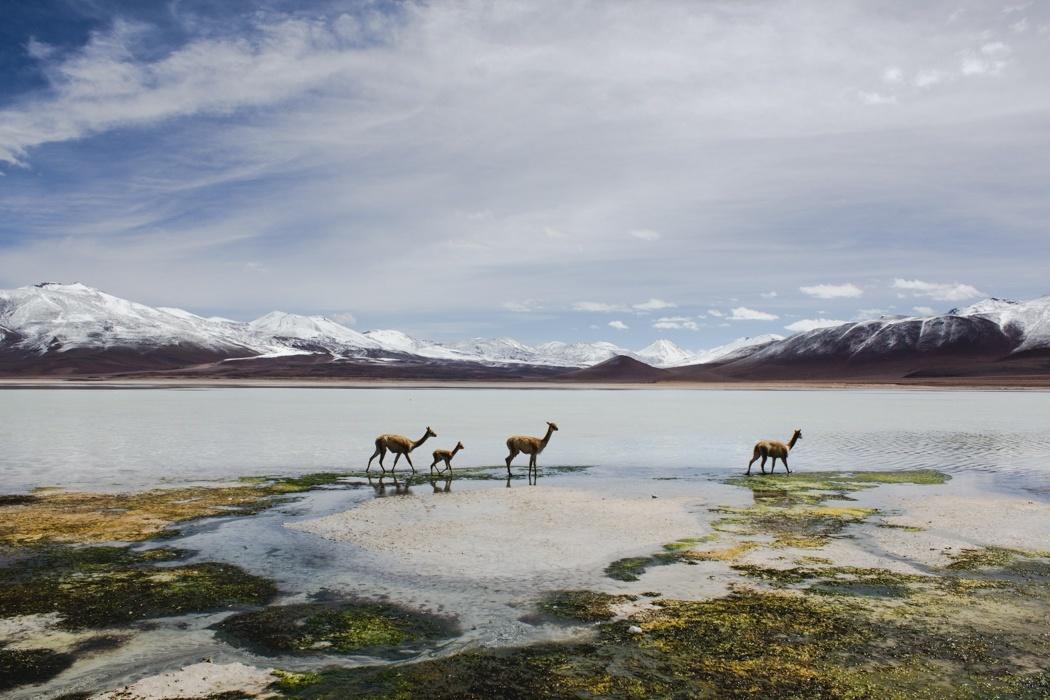 Orte-in-Bolivien-unbedingt-besuchen-Altiplanico-1