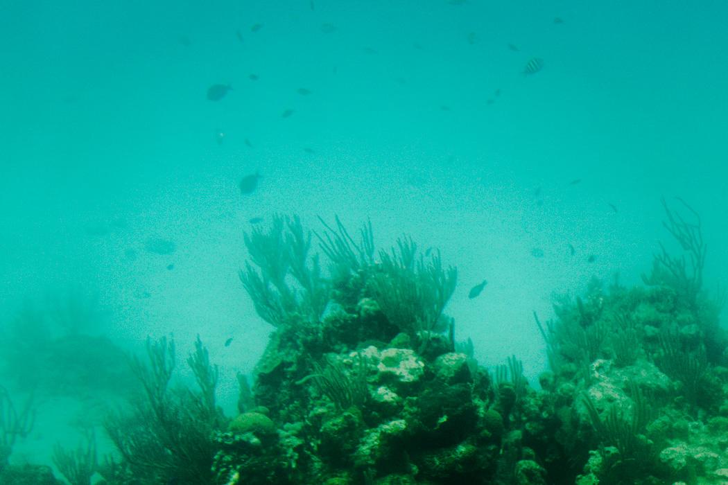 Honduras - 12 Gründe, warum das Land auf deine Bucket List gehört! - Glasbodenboot