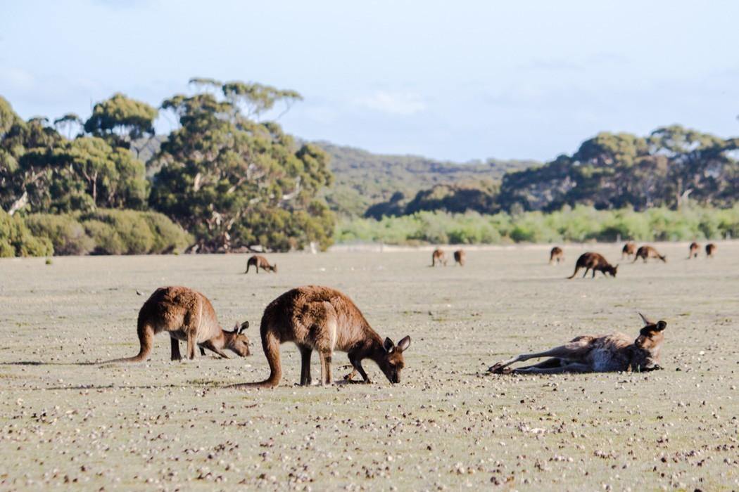Kangaroo-Island-Highlights-11