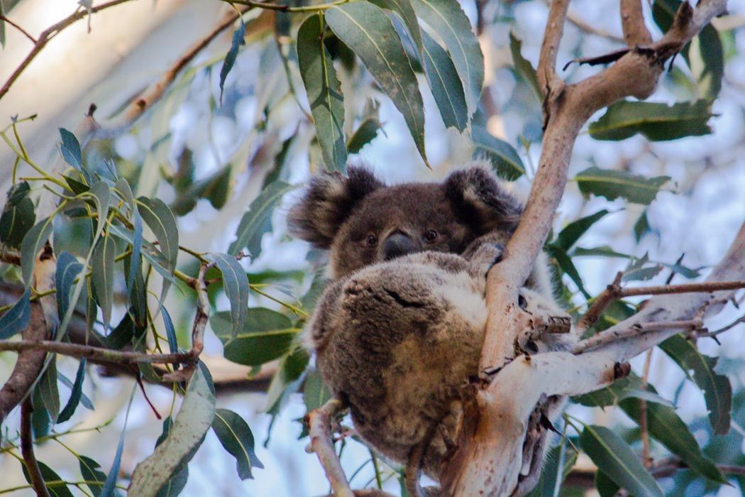 Kangaroo-Island-Highlights-8