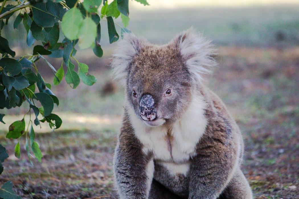 Kangaroo-Island-Highlights-9
