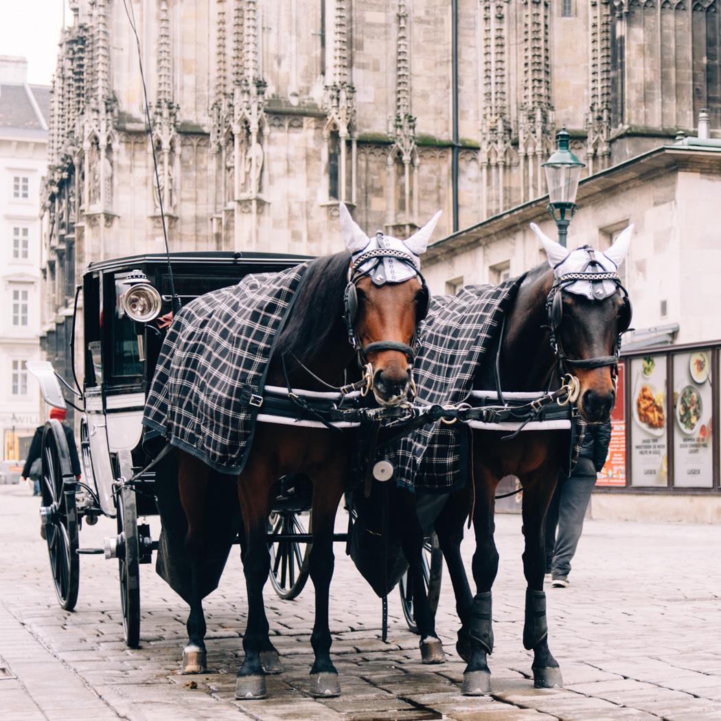 Was wäre der Stephansplatz ohne Kutschen?