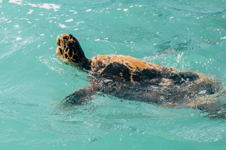 Schildkröten-Beobachtung im Sin Kaan Biosphärenreservat